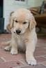 Smyth Pups June 2013-0693