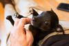 Smyth's new pup HATTIE  12-22-13-5025