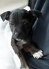 Smyth's new pup HATTIE  12-22-13-4840