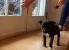 Smyth's new pup HATTIE  12-22-13-4930