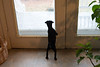 Smyth's new pup HATTIE  12-22-13-4768