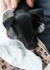 Smyth's new pup HATTIE  12-22-13-4844