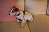 Smyth's new pup HATTIE  12-22-13-4788