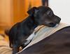 Smyth's new pup HATTIE  12-22-13-4939