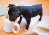 Smyth's new pup HATTIE  12-22-13-4972