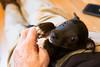 Smyth's new pup HATTIE  12-22-13-5024