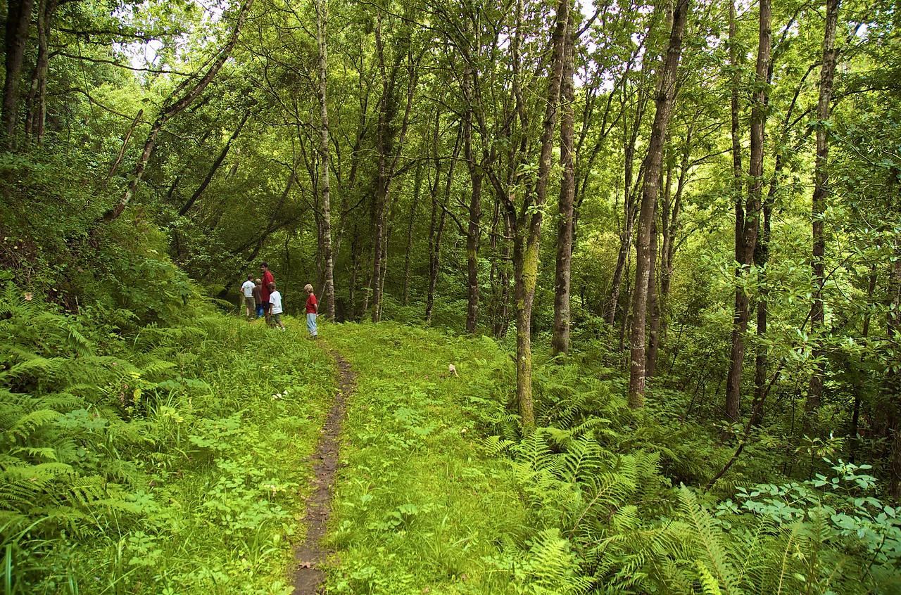 Un camino bien frondoso hacia una cueva en Ruiloba.