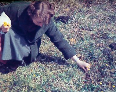 Grethe Renberg plukker blomster.