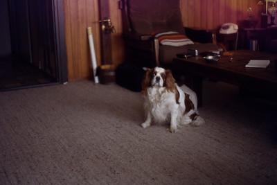 Rusty 1982