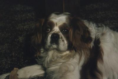 Rusty 1980