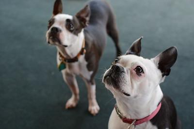 Gertie & Skeeter