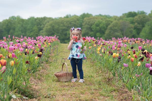 Tulip Farm Adventures