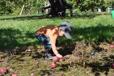 Pomme à Rougemont 2014