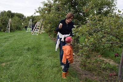 Pommes Robert Transport 2016