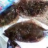 Mobile Upload - Flounder
