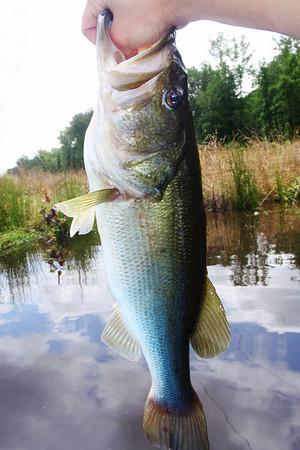 Just a regular size bass.