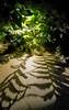 Longwood Gardens Nightscape 093