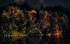 Longwood Gardens Nightscape 077