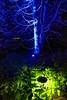Longwood Gardens Nightscape 017