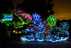 Longwood Gardens Nightscape 173