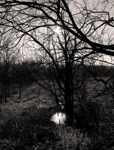 Caldwell Woods - December, 2009