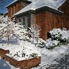 Snow_020