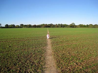 Holly fields 20101010