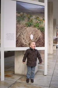 Jack was thrilled with the Frans Lanting Albatross exhibit at the National Geographic Society museum.