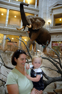 Natural History Museum.  Jack really enjoyed the dinosaurs and this elephant in the front hall.