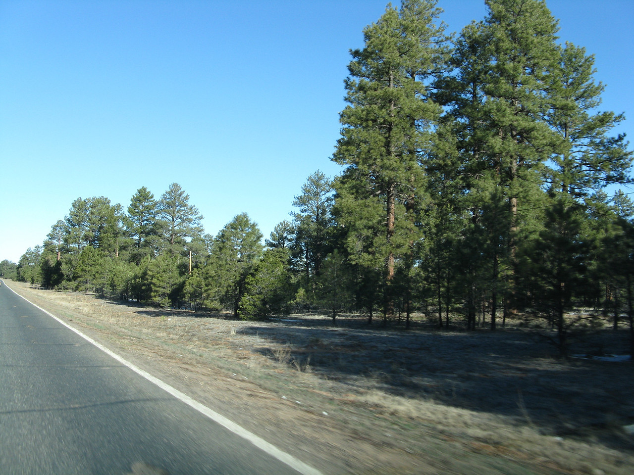 Tall evergreen trees line the road as we head west from Window Rock to Ganado.