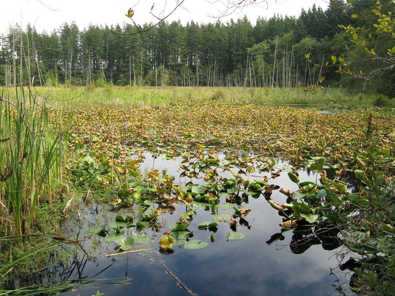 Cranberry Lake.  It was covered with vegetation.  We thought it should be named Cranberry bog or swamp.