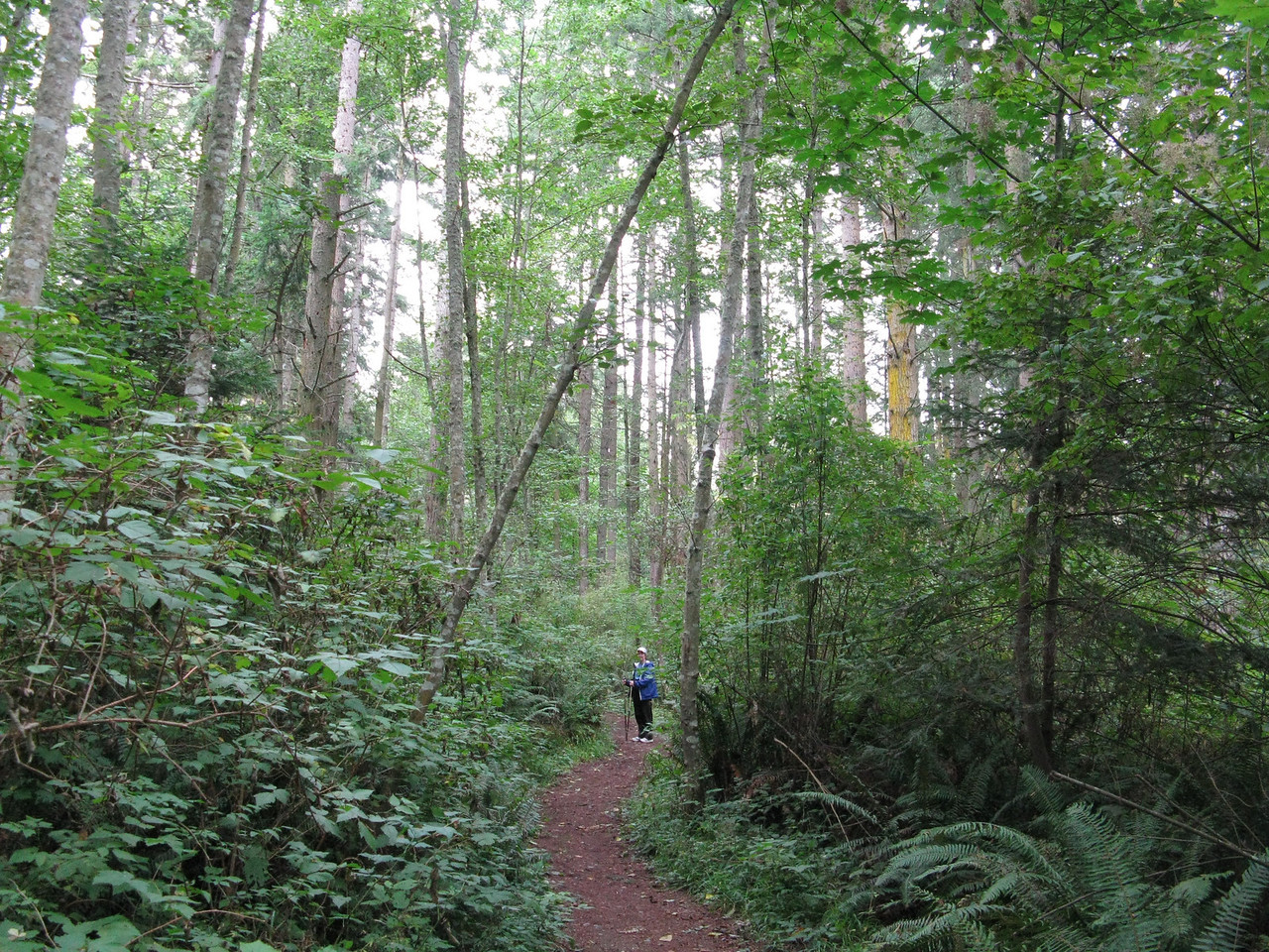 The Cranberry Lake Trail.