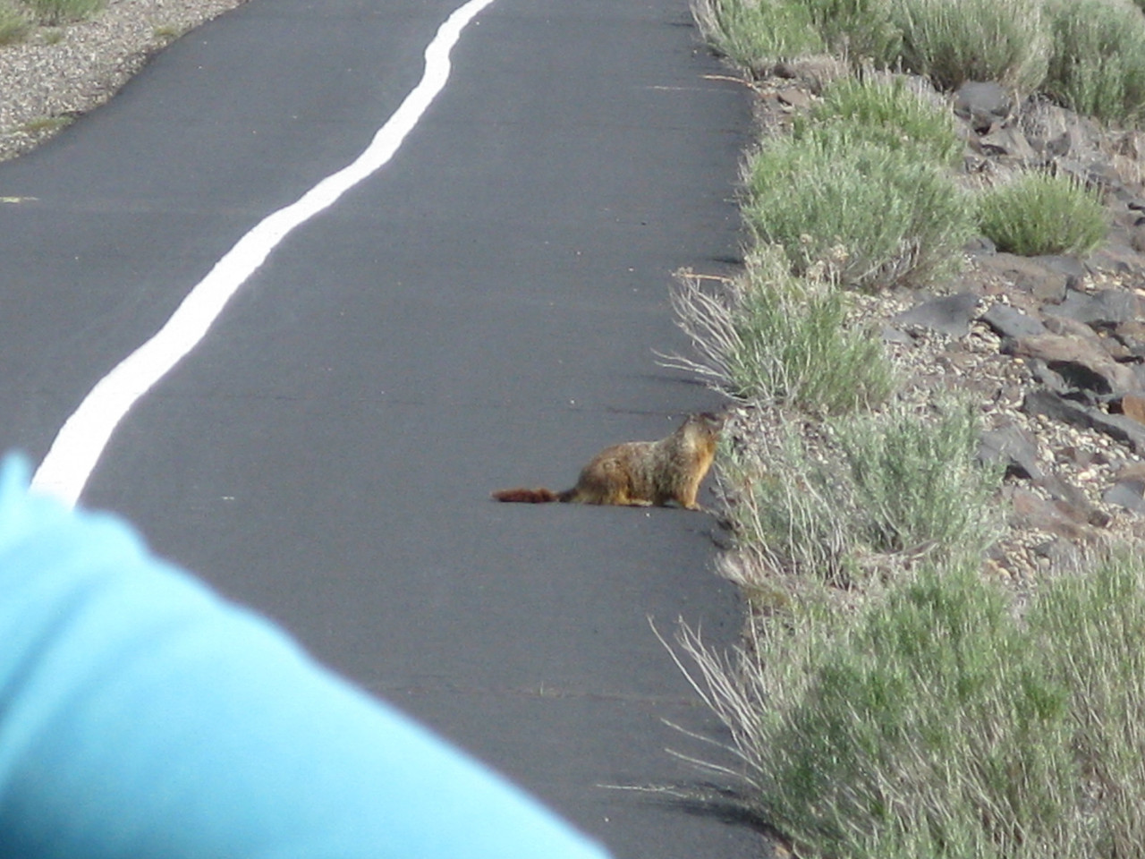 We saw this rodent on the path in front of us.  We are not sure what kind of animal he is, but we guessed a marmot.