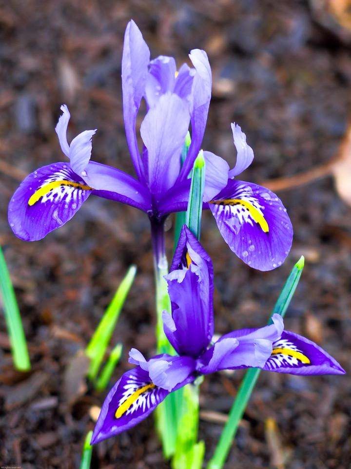 2015-02-05 flower (23)-1