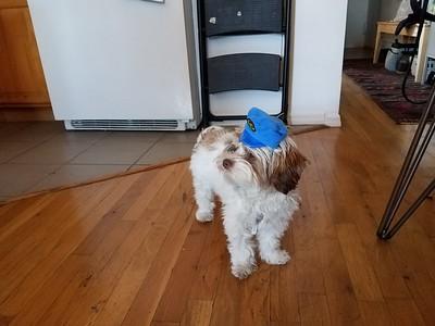Maple in her Japanese cap
