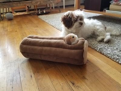 All fluffy