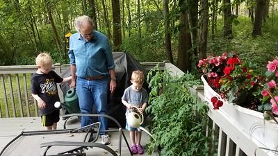 watering Grandpop's tomato plant