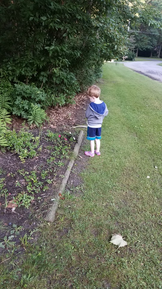 Samson watering the impatiens
