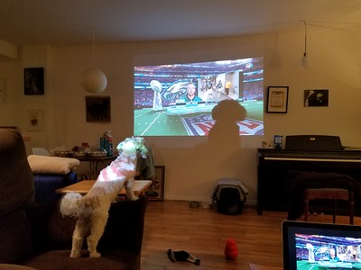 Maple watching the Superbowl