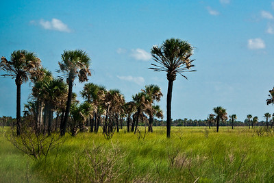Grasslands near Cape Canaveral