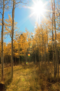 Fall Colors glow in the sun Lockett Meadow, Flagstaff,AZ