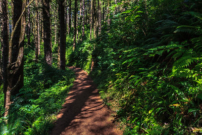 Beautiful Greenery Cape Lookout Trail