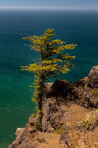 Lone Tree at Cape Lookout Point