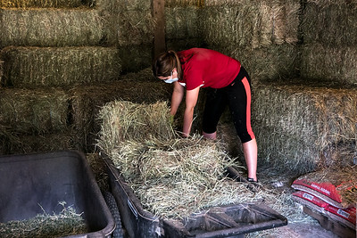 Emma doing one of her summer jobs at the Canterwood Stables