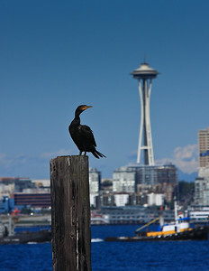 20080913-bird on pier space needle