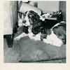 Peggy.<br /> The second dog of Drew and Bishop Reynolds.<br /> Tulsa, OK
