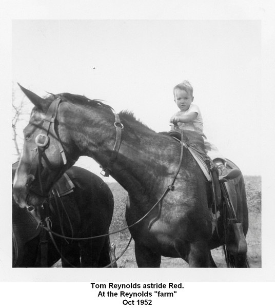 "Tom Reynolds astride Red.<br /> At the Reynolds ""farm""<br /> Oct 1952"
