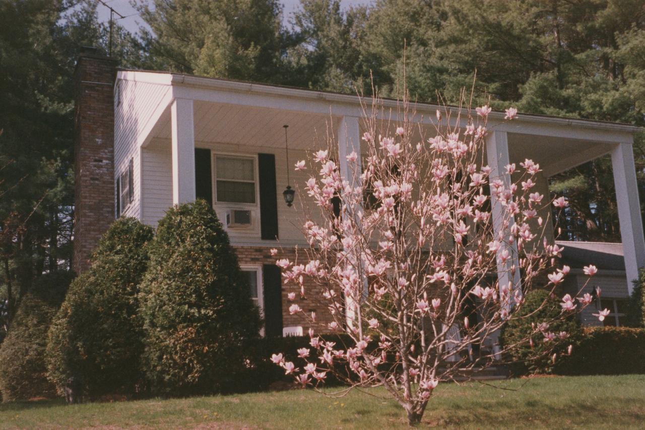 3 Nottingham Magnolia Tree 25