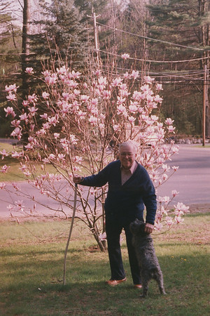 3 Nottingham Magnolia Tree 22