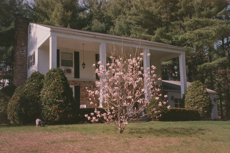 3 Nottingham Magnolia Tree 27